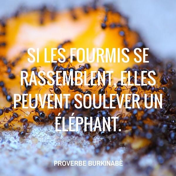 Proverbe burkinabè : Fourmis et éléphant